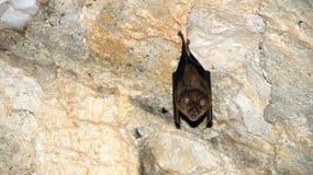 Смертная казнь через повешение летучей мыши в замке Стоковое Изображение RF