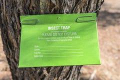 Смертная казнь через повешение ловушки насекомого в дереве Стоковые Фотографии RF