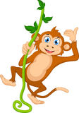 Смертная казнь через повешение обезьяны шаржа Стоковые Фотографии RF