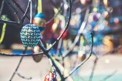 Смертная казнь через повешение пасхального яйца на ветви дерева Стоковые Фото