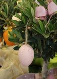Смертная казнь через повешение пасхального яйца от ветви оливки Стоковое фото RF