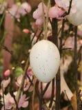 Смертная казнь через повешение пасхального яйца от ветви с розовыми цветками Стоковое Изображение RF