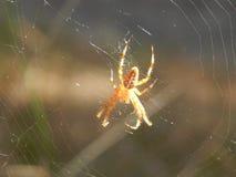 Смертная казнь через повешение паука насекомого живой природы на паутине Стоковые Фото