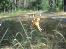 Смертная казнь через повешение паука насекомого на паутине на заднем плане леса Стоковые Изображения