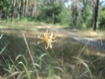 Смертная казнь через повешение паука насекомого на паутине на заднем плане леса Стоковые Фотографии RF
