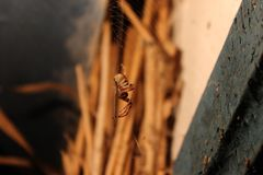 Смертная казнь через повешение паука на сети против предпосылки соломы Стоковая Фотография