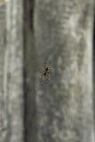 Смертная казнь через повешение паука на сети против серой деревянной предпосылки Стоковые Изображения