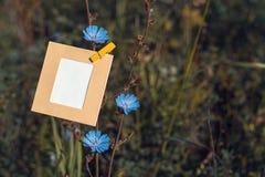 Смертная казнь через повешение пустой карточки на цикории цветка Стоковые Фото
