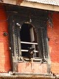 Смертная казнь через повешение собаки из окна Стоковая Фотография RF