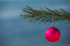 Смертная казнь через повешение шарика рождества розовая на ветви ели на заднем плане увидена океану Праздновать Новый Год и рожде Стоковое фото RF