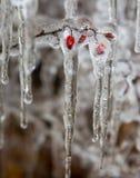 Смертная казнь через повешение льда от крыши Стоковые Изображения RF
