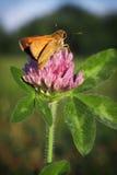 Смертная казнь через повешение Dragonfly на цветке Стоковые Фотографии RF