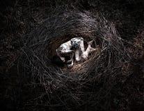 Смерть в лесе, девушка в гнезде стоковые фото