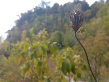 Смерть цветка Стоковое фото RF