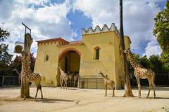 Смесь жирафа в зоопарке Стоковое фото RF