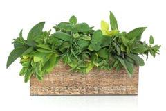 смесь листьев травы Стоковые Фото
