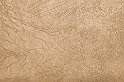 сметанообразная кожа Стоковые Фотографии RF