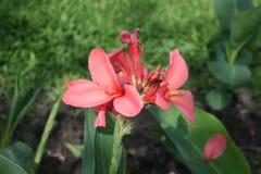 сметливость пинка цветка глубины крупного плана малая Стоковое Изображение RF
