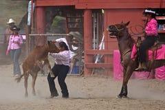 смех лошади Стоковые Изображения