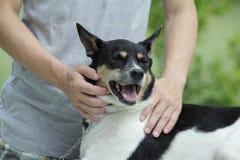 Смешанная собака породы. Стоковое Изображение RF