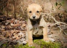 Смешанная собака щенка породы Стоковая Фотография RF