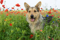 Смешанная собака стоковые фото