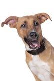 смешанная собака breed стоковые фотографии rf