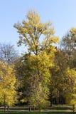 Смешанная территория леса стоковые изображения rf