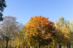 Смешанная территория леса стоковая фотография rf