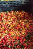 Смешанные красочные перцы красного цвета, оранжевых и желтых тайские chili Стоковое фото RF