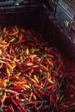 Смешанные красочные перцы красного цвета, оранжевых и желтых тайские chili Стоковое Фото