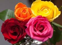 смешанные розы Стоковые Фотографии RF