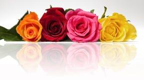 смешанные розы relection Стоковые Изображения RF