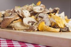 Смешанные свежие грибы Стоковое Фото