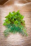 Смешанные травы - укроп, cilantro, мята, базилик, астрагон и розмариновое масло Стоковые Изображения