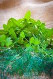 Смешанные травы - укроп, cilantro, мята, базилик, астрагон и розмариновое масло Стоковое Изображение