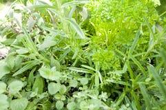 смешанные травы Стоковые Изображения RF