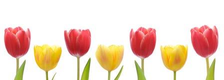 смешанные тюльпаны стоковое изображение rf