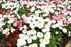 Смешанные цветки Стоковое Изображение
