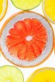 Смешанные цитрусовые фрукты Стоковое Изображение RF