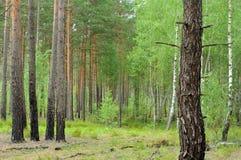 Смешанный лес Стоковое фото RF