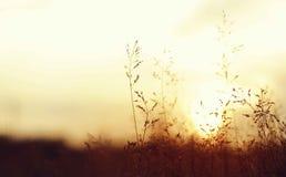 Смешанный золотой свет от запада стоковое изображение