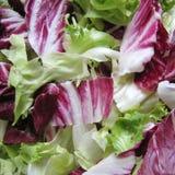 Смешанный крупный план салата Стоковая Фотография RF