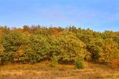 Смешанный лес сосны, березы, дуба против голубого неба Ландшафт осени стоковые изображения