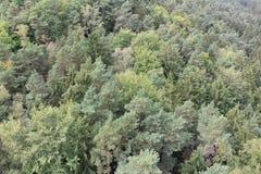 Смешанный лес Стоковое Изображение