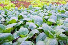 Смешанный органический сад Стоковые Изображения RF