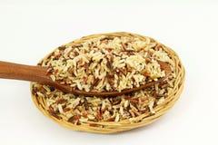 Смешанный одичалый органический коричневый рис Стоковые Фото