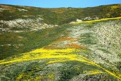 Смешанный холм цвета Стоковые Фотографии RF