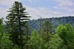 Смешанный coniferous-лиственный лес Стоковая Фотография RF