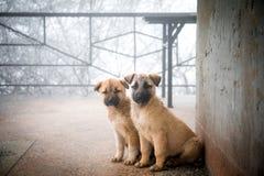 2 смешанных щенят породы сидя в виде спереди 2 маленьких собаки сидя на поле балкона стоковая фотография rf